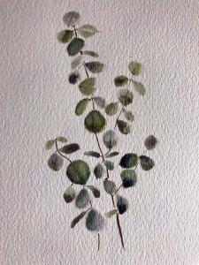watercolour leaves eucalyptus